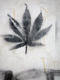 Graffiti of a Marijuana Leaf Photographic Print by David Evans