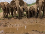 Elephant Family at a River's Edge in Samburu National Reserve Photographic Print by Michael Nichols