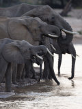 Elephants Drinking at a River in Samburu National Park Photographic Print by Michael Nichols