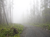 Foggy Day on a Logging Road in the Sooke Hills Photographic Print by Taylor S. Kennedy