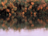 Calm Ripples Along the Edge of the Okavango River Photographic Print by Gianluca Colla