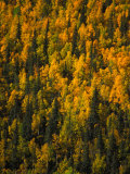 Fall Colors in a Forest Photographic Print by Nick Norman