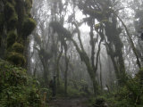 African Porter in the Rainforest of Mount Kilimanjaro Photographic Print by Gina Martin