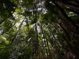 Rain Forest Canopy in Bako National Park Photographic Print by Mattias Klum