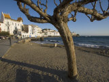 Gnarled Tree on the Beach at Cadaques, a Small Seaside Village Photographic Print by Scott Warren