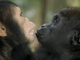 Baby Gorilla and a Chimpanzee Photographic Print by Michael Polzia