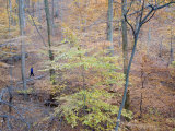 Woman Runs on a Trail Through Eastern Hardwood Forest in the Fall Photographic Print by Skip Brown