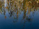 Reeds and Water Lily Pads and Reflections of the Sky Photographic Print by Michael Polzia