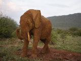 Elephant Mudding in Samburu National Reserve Photographic Print by Michael Nichols