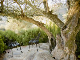 Two Chairs on a Terrace under an Old Olive Tree Photographic Print by Michael Melford