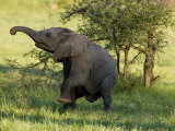 Dancing Baby Elephant Photographic Print by Michael Polzia