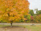 Mike Theiss.  Sugar Maple Tree in Bright Autumn Hues of Orange and...