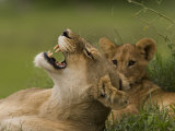 Lioness and a Cub Resting in the Shade Photographic Print by Beverly Joubert