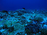 Coral Reef Photographic Print by Nick Norman