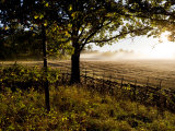Sunlight and Mists Rising from a Farmer's Fields Photographic Print by Mattias Klum