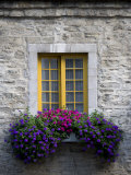 Flowers Bloom in a Window Box Photographic Print by Pete Ryan