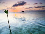 Sunset on the Flats of Acklins Island, Bahamas Photographic Print by Drew Rush