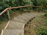 Stairway Through the Jungle at Welchez Coffee Plantation Photographic Print by Richard Nowitz