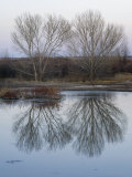 Trees at the Bosque Del Apache National Wildlife Refuge Near Socorro Photographic Print by Scott Warren