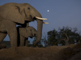 Mother Elephant with Her Calf Photographic Print by Michael Nichols