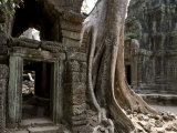 Fig Tree Growing over Crumbling Ruins at Angkor Wat Photographic Print by Rebecca Hale