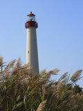 Cape May Lighthouse and Reeds Bending in a Gentle Breeze Photographic Print by George Grall