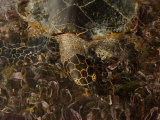 Hawksbill Turtle in Shallow Water Photographic Print by Beverly Joubert