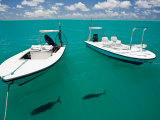 Two Tropical Fish Swimming Just under the Water Near Anchored Boats Photographic Print by Beverly Joubert