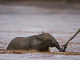 Baby Elephant During a River Crossing in Samburu National Reserve Photographic Print by Michael Nichols
