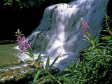 Fireweed and Ouzel Falls, Near Big Sky Photographic Print by Gordon Wiltsie