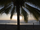 Palm Tree on the Beach at Sunset Photographic Print by Rich Reid