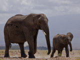 African Elephant and Calf Photographic Print by Beverly Joubert