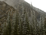 Early Snowfall Dusts a Forest in Alberta , Canada&#39;s Banff National Park Photographic Print by Gordon Wiltsie