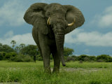 Elephant Standing in the Savannah Photographic Print by Beverly Joubert
