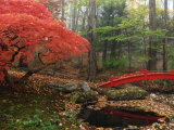 Japanese Maple Garden with Red Bridge Photographic Print by Darlyne A. Murawski