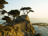 Cypress Tree Along the 17-Mile Drive Outside of Carmel in Monterey County Photographic Print by Richard Nowitz