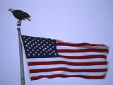 Bald Eagle Sits on a Flagpole Above a Fluttering American Flag Photographic Print by Michael Melford