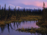 Beaver Pond in the Boreal Forest of Interior Alaska Photographic Print by Michael S. Quinton