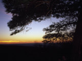 Silhouetted Pine Tree at Sunset Photographic Print by Raymond Gehman