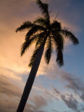 Palm Tree Silhouette at Twilight Photographic Print by Richard Nowitz