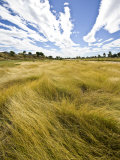 Tall Dry Season Grass Lines the Shore of the Flinders River in Drought Photographic Print by Jason Edwards