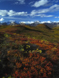 Fall Colors in an Alaskan Field Photographic Print by Nick Norman