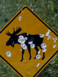 Moose Crossing Sign with Damage from Gunfire Photographic Print by Michael Melford