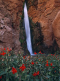 Monkey Flowers at the Base of a Waterfall Fed by the Colorado River Photographic Print by David Edwards