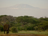 African Elephant in African Landscape with Mount Kilimanjaro Backdrop Photographic Print by Beverly Joubert