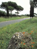 Appian Way, an Ancient Roman Road Photographic Print by Richard Nowitz