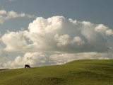 Cow Grazing on the Hills Near Killdeer, North Dakota Photographic Print by Phil Schermeister