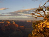 Grand Canyon from Yavapai Point Photographic Print by David Edwards