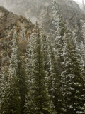 Early Snowfall Dusts a Forest in Alberta , Canada's Banff National Park Photographic Print by Gordon Wiltsie