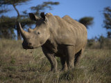 Rhinoceros in Samburu National Reserve Photographic Print by Michael Nichols